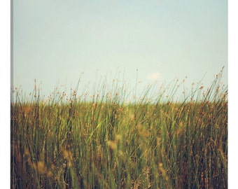 iCanvas Tall Grass Gallery Wrapped Canvas Art Print by Alicia Bock
