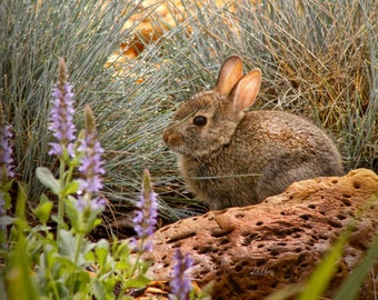 Morning Dew Bunny