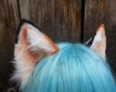 large calico kitten ears