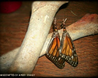 Genuine Danaus Plexippus Earrings