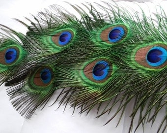 BBF(Before Black Friday) Peacock Feathers,Five All Seeing Eye Feathers, Eyes Measure 1.5x2 in, 8 to 18in in Length,Weddings,Prom.Shower,Cent