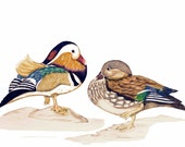 Marvellous Mandarin Ducks, Aix galericulata, LIMITED EDITION, Print with Certificate of Authenticity, Duck Art, Ducks Love, Symbol Loyality
