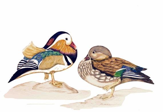 LIMITED EDITION Marvelous Mandarin Ducks, Aix galericulata, Print Authenticity, Duck Art, Ducks Love, Symbol Loyality