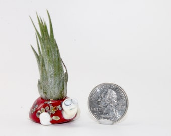 Lampwork Glass Turtle Air Plant Holder . Air Plant Container . by Lori Davidson