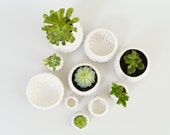 Modern Ceramic Planters Small Mini Plant Pots ~ Handmade White Ceramic Bowls Sculptural Urchin Pots British Studio Pottery Brighton, UK