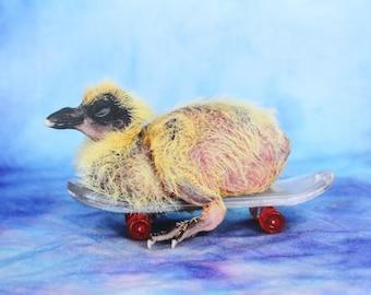 SKATER PIGEON print