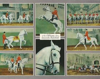 Spanische Reitschule - Vintage 1960s Multiview Vienna Spanish Riding School Lipizzans Postcard