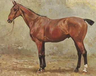 Beautiful Herero - Antique 1910s Tuck's Oilette Artist-signed Named Horse Postcard