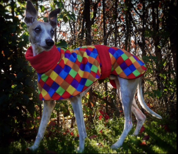 whippet and greyhound double fleece housecoats and kennel coats jumpers