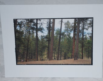 photo card, Jemez Mountains, New Mexico photography