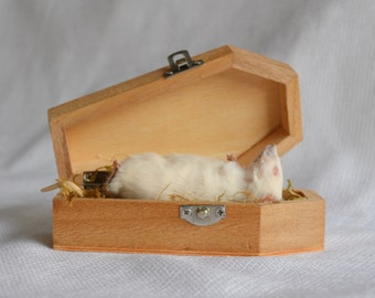 Taxidermy mouse in coffin