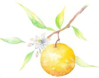 Fruit, fruit art, print, giclee art, watercolor, watercolor print, flower, Yuzu, grapefruit, Original, watercolor, giclee print
