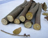 Holly wood sticks, Craft Supply, Magical Tool, Wicca, Pagan, Natural