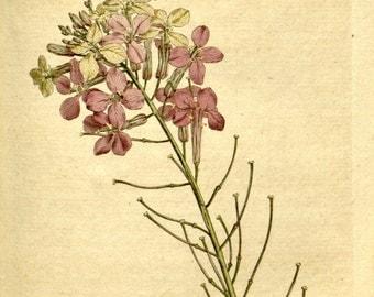 Wall decor, Nature art, Botanical, Vintage print, Nature, Botanical art, Flower print, 195