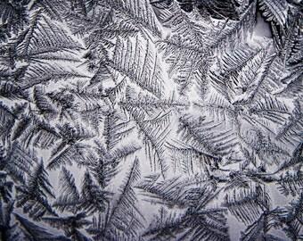 Winter Picture, Snow Picture, Snow Photo, Winter Print, Ice Picture, Ice Photo, Winter Photography, Snow Print, Nature Picture, Nature Print