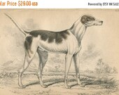 SALE Antique Original Hand Colored Steel Engraved 1843 Book Plate Print Jardine Naturalist Library Mammalia Canine Dog Oriental Hound #11