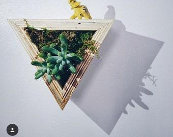 succulent shelf