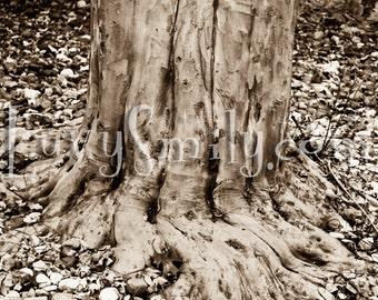 Sepia Tree Photograph