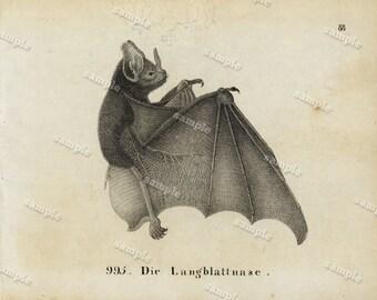 1830 Original Antique Engraving of Animal  -Bats- Black and white