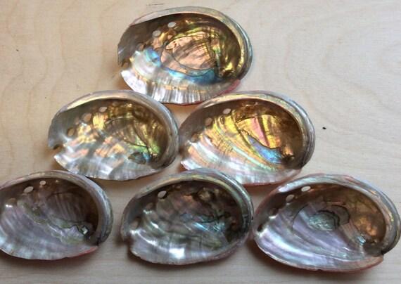abalone shell gemstone display shell healing stones