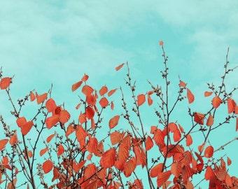 Nature Autumn Orange Red Photograph - Autumn Tree Art - Turquoise Sky - Wall Decor - Autumn Photograph - Fall Foliage - Nature Photograph