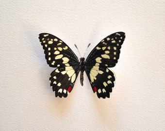 Hand-painted Common Lime Butterfly Specimen