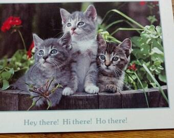 VINTAGE,cat kitten,postcard ,unused,NICE VINTAGE