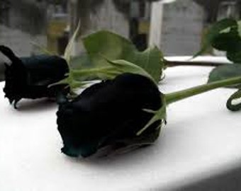 Black rose seeds,1, flower roses seeds,roses from seeds,planting roses,growing roses from seeds,seeds for roses