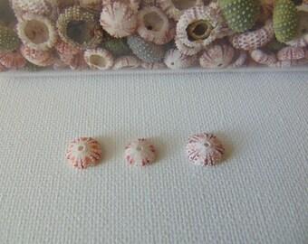 6 pcs small (very tiny -tiny)  sea urchins, a real sea treasure.