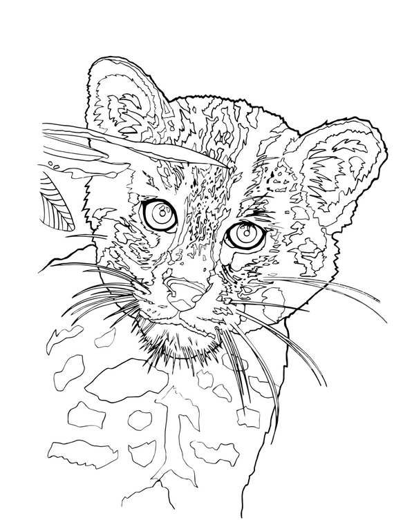 wild cats coloring pages - items similar to young fishing cat wild cat instant