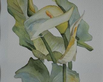 Calla Lilly Botanical Portrait Print
