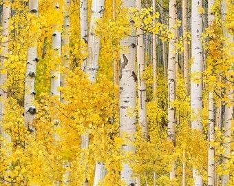 Landscape Medley Gold Birch Trees Nature Cotton Elizabeth's Studio Fabric #5783