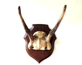French Vintage Mounted Deer Antlers/ Vintage Mounted Antlers/ Vintage Deer Antlers/Mounted Deer Skull And Antlers/Mounted Skull And Horns