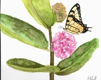 Tiger Swallowtail on Milkweed Plant