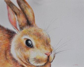 Original Drawing, Colored Pencil Rabbit, Cute Bunny Portrait 5.5x8 inch