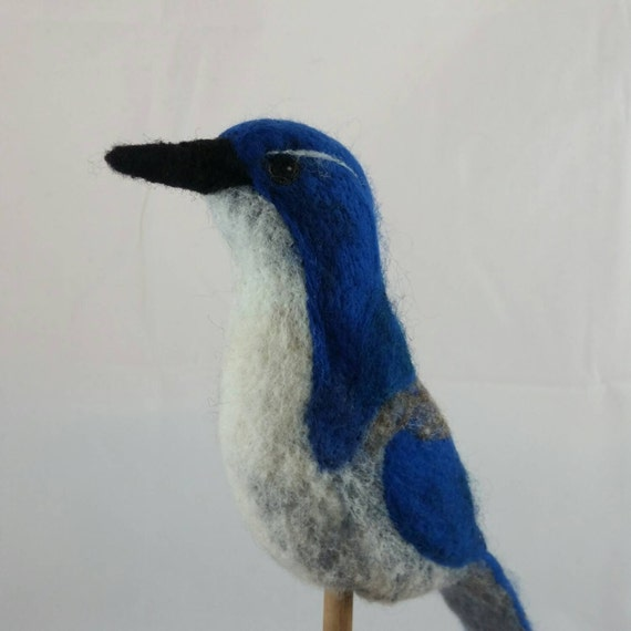 Western Scrub-Jay 100% sheep wool needle felted fiber sculpture.
