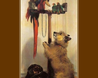 """11 x 14"""" cotton canvas art print- Macaw Parrot with a terrier spaniel dog by Landseer"""