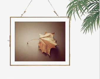 Minimalist art fall decor autumn leaves photograph rustic room decor dark brown wall art maple leaf print 12x16 art fireplace wall decor art