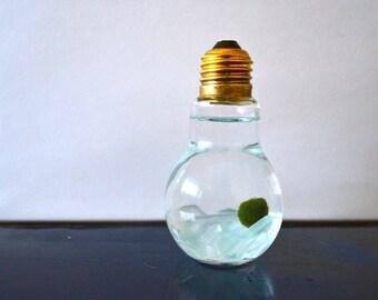 Marimo Moss Ball Light Bulb Aquariums - Japanese Nano Moss Balls in Lightbulb Glass Vase Terrariums - Sea Glass Clear