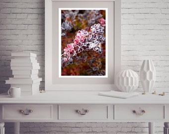 Photograph - Pink and Red Autumn Fall Leaves Leaf covered in Morning Frost Ice Fine Art Photography Print Wall Art Home Decor