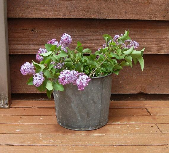 Rustic sap bucket large sap bucket flower bucket galvanized for Large galvanized buckets for flowers