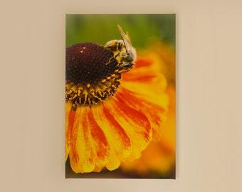 Beautiful fine art canvas print - Bee and Echinacea Flower