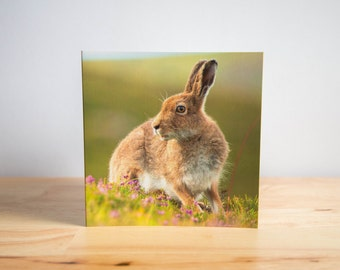 MOUNTAIN HARE Blank Greetings Card