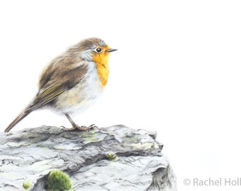 "8x10"" European Robin - British Wildlife Prints - Wildlife Nature Art - Robin Print"