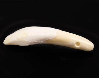 100 drilled water buffalo teeth : craft, real