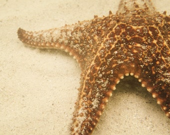 matted print- Starfish
