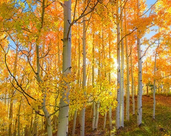 Utah Photography, Oversized Fall Wall Art, Golden Aspen Trees, Autumn Colors, Yellow Blue, Mountain Print, Large Wall Art, Fall Wall Decor