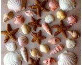 Fondant Edible Seashells ...