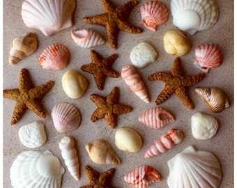 Fondant Edible Seashells for DIY Beach Wedding Cake- Choice of Amount and Colors-Dusted With Edible Pearl Dust