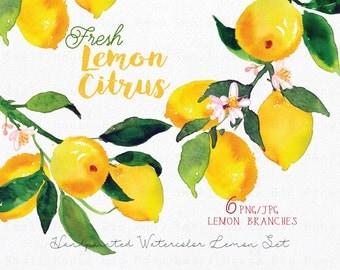 Lemon Watercolour Clipart Set. Handmade, watercolour clipart, summer, wedding diy elements, fruit - Fresh Lemon Citrus